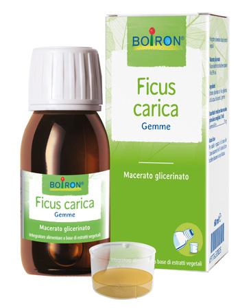 FICUS CARICA GEMME MACERATO GLICERINATO 60 ML INT