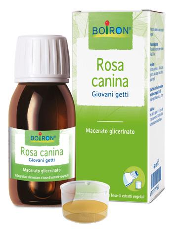 ROSA CANINA MACERATO GLICERICO 60 ML INT